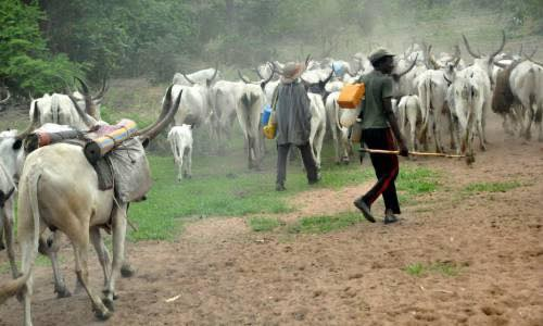 Fulani Herdsmen and their cows aimlessly parading the bushes of Southern Nigeria, killing the farmers, destroying their farmlands to feed their cows and annexing most farmlands.